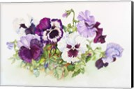 White and Purple Pansies II Fine-Art Print