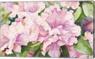 Sun Lit Azalea Fine-Art Print