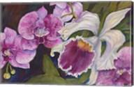 Orchid Fine-Art Print