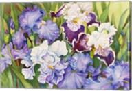 Irises in Shades of Lavender Fine-Art Print