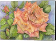 Peach Blush Rose Fine-Art Print