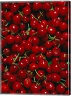 Cherries, Normandy, France Fine-Art Print