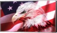 American Bald Eagle II Fine-Art Print