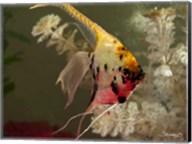 Angel Fish XIV Fine-Art Print