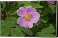 North Shore Pink Flower Fine-Art Print