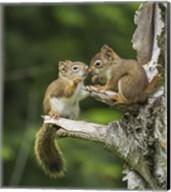 Squirrel Nose Rubbing Fine-Art Print