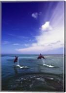 Dolphin Blue Water Swim Jump Fine-Art Print