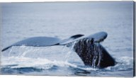 Whale Tail And Sea Fine-Art Print