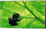 Frog Silhouette On Leaf Fine-Art Print