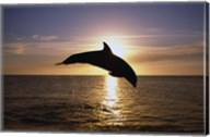 Dolphin Sunset Dive I Fine-Art Print