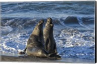 Seals Singing Fine-Art Print