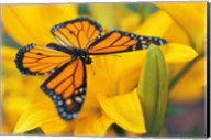 Orange Butterfly Landing Fine-Art Print