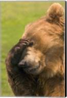 Brown Bear Disbelief Fine-Art Print