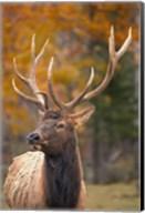 Fall Deer Antlers Fine-Art Print