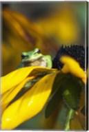 Frog Found Fine-Art Print