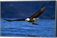 Soaring Eagle Over Blue Sea Fine-Art Print