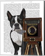 Boston Terrier Photographer Fine-Art Print
