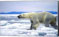 Polar Bear on Ice Float Fine-Art Print