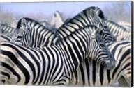 Zebra Pack Fine-Art Print
