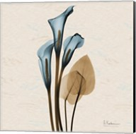 Calla Lily Blue Brown H36 Fine-Art Print