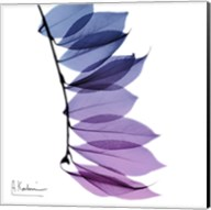 Camelia Leaf In Purp Fine-Art Print