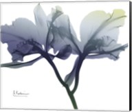 Midnight Orchid 1 Fine-Art Print