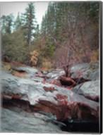 Sierra Nevada Forest 1 Fine-Art Print