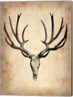 Vintage Deer Scull Fine-Art Print
