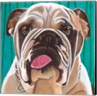 Dlynn's Dogs - Bosco Fine-Art Print