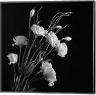 White Flowers Gray Fine-Art Print