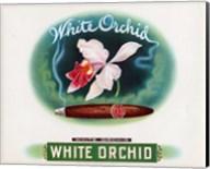 White Orchid Fine-Art Print