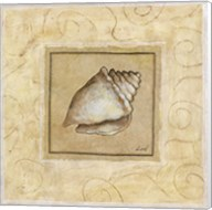 Conch Shell Fine-Art Print
