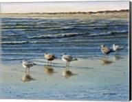 Cape May Herring Gulls Fine-Art Print
