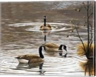 North Carolina Geese Fine-Art Print