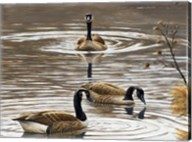 North Carolina Geese Fine-Art Print