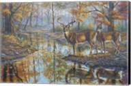 Brookside Retreat - Whitetails Fine-Art Print