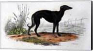 Dog VI Fine-Art Print