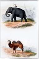 Elephant and Camel Fine-Art Print