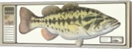 World Record Largemouth Bass Fine-Art Print