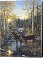 Whitetail Deer Fine-Art Print