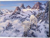 Among The Clouds - Mtn. Goat Fine-Art Print