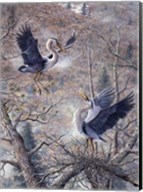 Nesting Time - Great Blue Herons Fine-Art Print