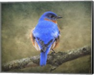 Bluebird Portrait Fine-Art Print