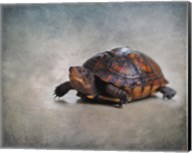 Box Turtle Portrait Fine-Art Print