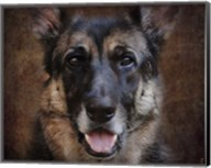 German Shepherd Face Fine-Art Print