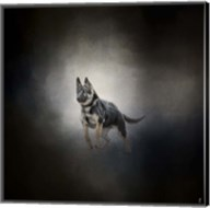 German Shepherd Puppy Feet First Fine-Art Print