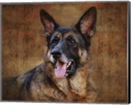 German Shepherd Fine-Art Print