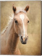Golden Girl Palomino Horse Fine-Art Print