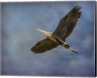 Heron Overhead Fine-Art Print