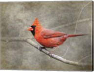 His Red Glory Cardinal Fine-Art Print